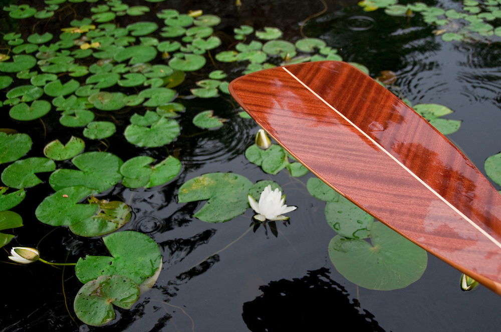 Water lily and canoe at Craig Lake State Park near Michigamme Michigan.