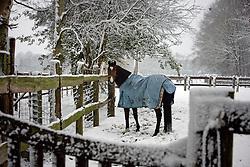 Horses in snow<br /> Zandhoven 2007<br /> © Dirk Caremans