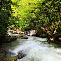 """""""Let there be Light""""<br /> <br /> Mid morning sunlight streams through the trees and forest at Meadow Run in Ohiopyle State Park! A beautiful large and rapid flowing stream that leads to the Youghiogheny River!<br /> <br /> Laurel Highlands Area of Pennsylvania by Rachel Cohen"""