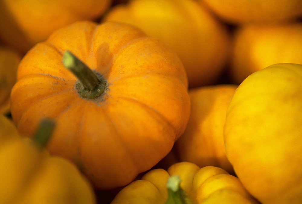 Close up selective focus photograph of a pile of small pumpkins