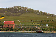 West Point Shearing Shed seen from West Point Harbour. Above the door is a Southern Sea lion skull which has been there for amost 100 year.<br /> West Point Island. Off of West Falkland. FALKLAND ISLANDS.<br /> An island owned by Roddy and Lily Napier who have lived there for most of their lives. It is a small sheep farm with about 1,000 sheep and some cattle but now they survive mainly on tourism with several cruise ships visiting during the summer. The island is renowed for its huge Black-browed Albatross Rockhopper Penguin colonies.