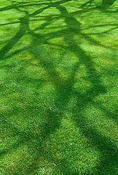 Shadows on lawn