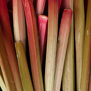 Rhubarb for sale at at farmstand in Concord, MA, USA