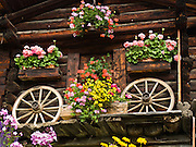 Flowers bloom in boxes at an old wood chalet decorated with wagon wheels in Murren, Switzerland, the Alps, Europe.