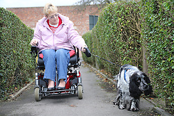 Wheelchair user talking dog for walk
