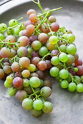 Strawberry dessert grape - Vitis labrusca hybrid