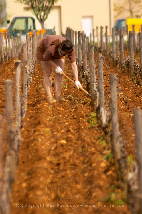 A woman vineyard worker manually removing weed from the Romanee Saint Vivant grand cru vineyard in Vosne Romanee