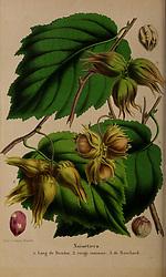 Belgique horticole.<br /> Liége.<br /> https://biodiversitylibrary.org/page/42990396