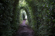 Hedge in the shape of a tunnel in Axmouth, Devon, England, United Kingdom.