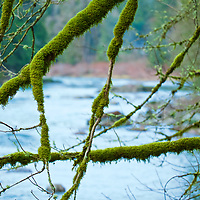 You have not seen moss until you have spent time in a Pac North West forest.