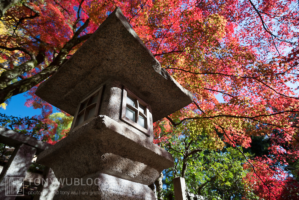 Momiji Japanese maple trees displaying an entire rainbow of autumn colors. Photographed at Kita no Tenman-gu in Kyoto, Japan.