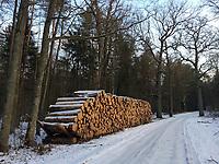Puszcza Bialowieska, 21.02.2018. N/z sciete drzewa przygotowane do wywozki w oddziale 500D w Puszczy Bialowieskiej fot Michal Kosc / AGENCJA WSCHOD