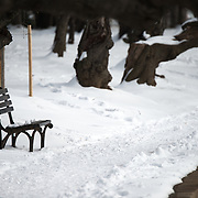 Snow covers the banks of the Tidal Basin in Washington DC after a winter snow storm.