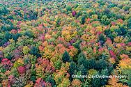 64776-02119 Aerial view of Hugoboom Lake in fall color Alger Co. MI