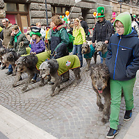 Revellers participate with irish dogs in a Saint Patrick's day celebration march in Budapest, Hungary on March 17, 2013. ATTILA VOLGYI