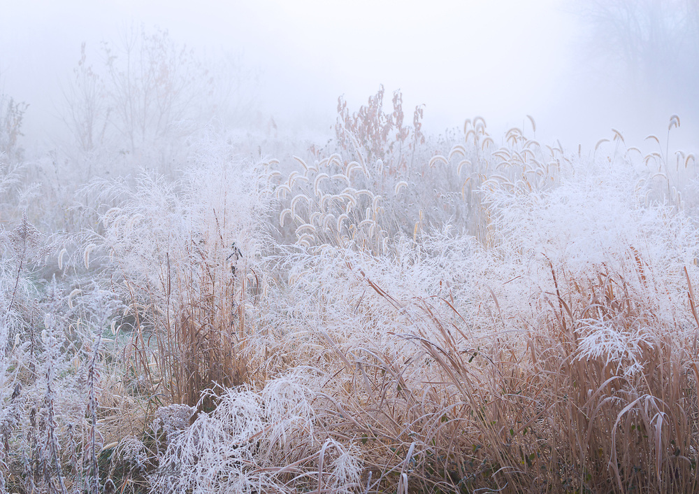 A heavy frosty fog covered Bombay Hook this morning creating a magical world at Bombay Hook NWR