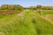 Early summer vegetation on River Ore dyke coastal footpath, Boyton, Suffolk, England, UK
