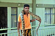 Snake charmer holds an Indian Python (Python molurus), Sri Lanka