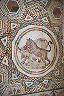 Picture of a geometric Roman mosaics design depicting lions hunting animals, from the ancient Roman city of Thysdrus. 3rd century AD. El Djem Archaeological Museum, El Djem, Tunisia. .<br /> <br /> If you prefer to buy from our ALAMY PHOTO LIBRARY  Collection visit : https://www.alamy.com/portfolio/paul-williams-funkystock/roman-mosaic.html  . Type -   El Djem   - into the LOWER SEARCH WITHIN GALLERY box. Refine search by adding background colour, place, museum etc<br /> <br /> Visit our ROMAN MOSAIC PHOTO COLLECTIONS for more photos to download  as wall art prints https://funkystock.photoshelter.com/gallery-collection/Roman-Mosaics-Art-Pictures-Images/C0000LcfNel7FpLI