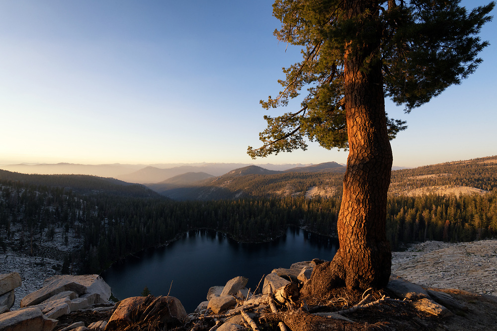 A Jeffrey Pine stand sentinel over Jennie Lakes in the Jennie Lakes Wilderness in California.