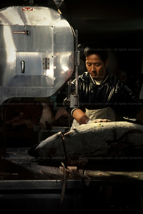 A man saws up a large tuna at Tsukiji fish market. Tokyo , Japan. Located in central Tokyo`s Chou Ward Tsukiji is the worlds largest and busiest fish market and has a history stretching back to the 1700s. Early every morning the Tuna auction takes place when huge Tuna fish are sold off, some for thousands of Dollars. September 16th 2005