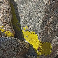 Lichens grow on granite rocks in California's eastern Sierra Nevada.
