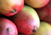 Close up selective focus photograph of a group of Mangoes