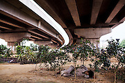 A man sleep under a newly made highway between Delhi and Gurgaon, India - 2007