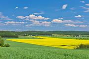 Canola crop in bloom<br />St-Bruno-de-Guigues<br />Quebec<br />Canada