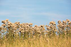 field of wildflowers in The Hamptons