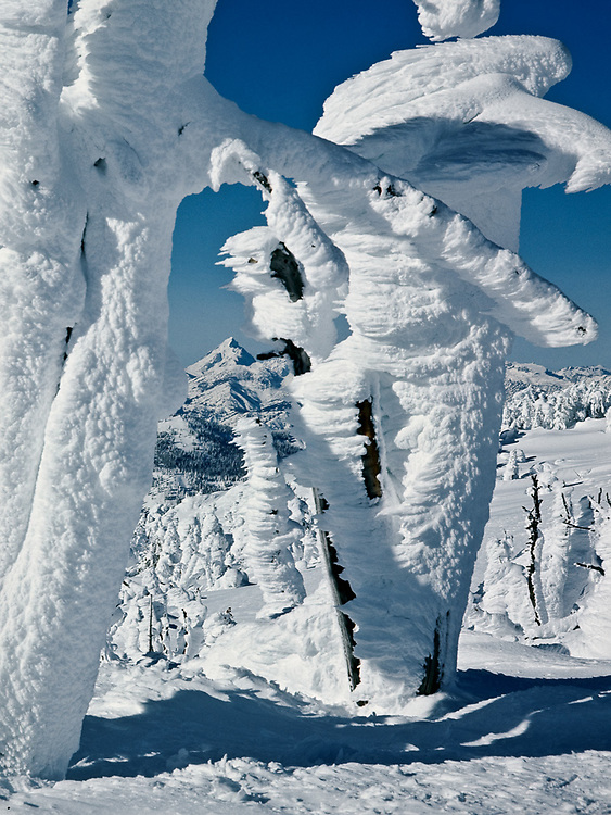 Snow-sculpted trees, January, Mount Stuart in the distance, Mission Ridge, Wenatchee National Forest, Washington, USA