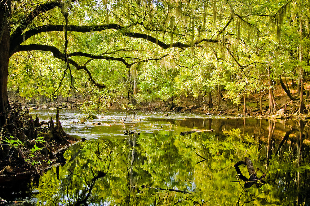 Early morning tranquility on the banks of the Santa Fe River in North-Central Florida.