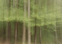Backyard trees.  ©Karen Bobotas Photographer