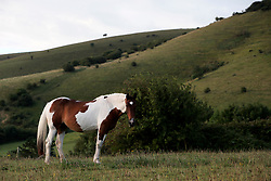 UK ENGLAND 29JUL17 - Horses in a field in the South Downs National Park, England.<br /> <br /> <br /> <br /> jre/Photo by Jiri Rezac<br /> <br /> <br /> <br /> © Jiri Rezac 2017