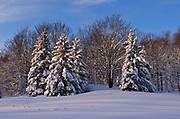 Winter snowfall in forest<br />Bracebridge<br />Ontario<br />Canada