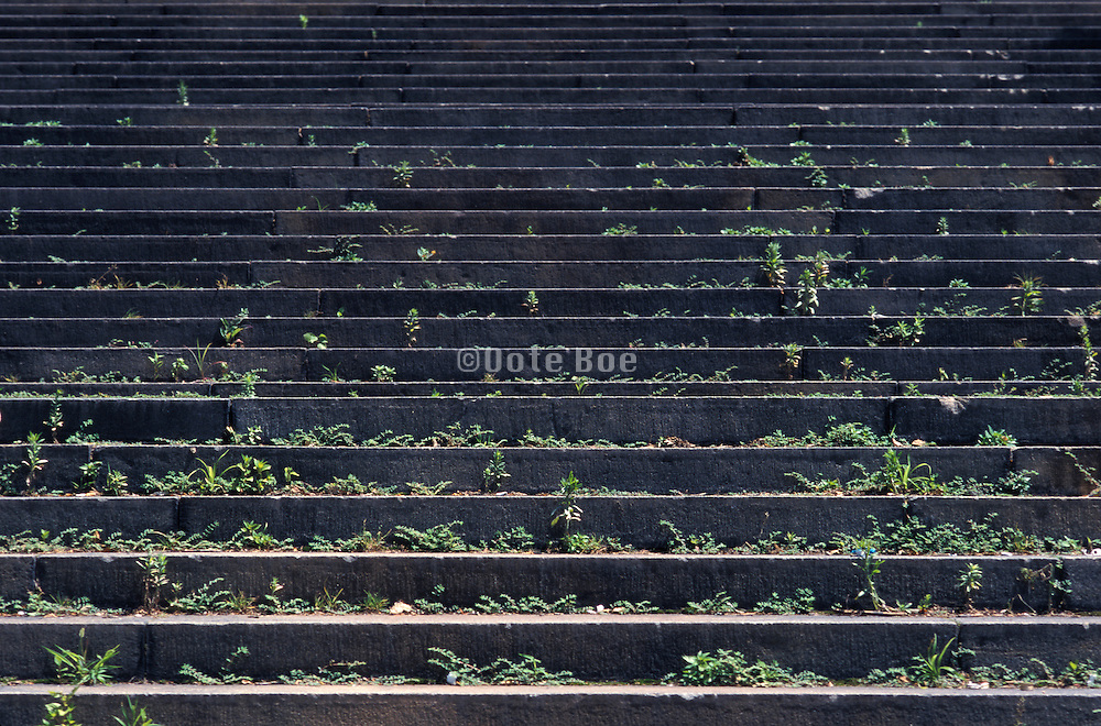 Concrete steps overgrown with plants
