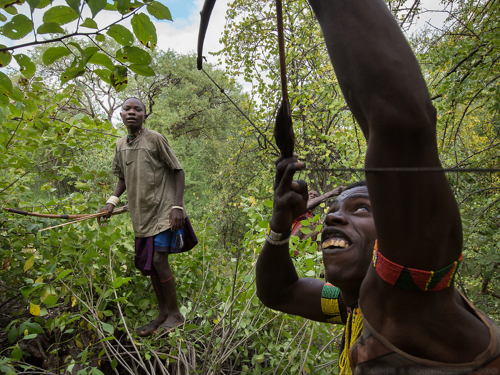 The men are going hunting with bow and arrows. At the Hadza camp of Dedauko.