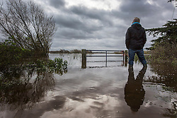 © Licensed to London News Pictures. 19/11/2015. Acaster Selby  UK. A man surveys the flooding at Acaster Selby after the River Ouse broke it's banks & flooded farm land in the area. The environment agency has said further flooding in the area is expected today. Photo credit: Andrew McCaren/LNP