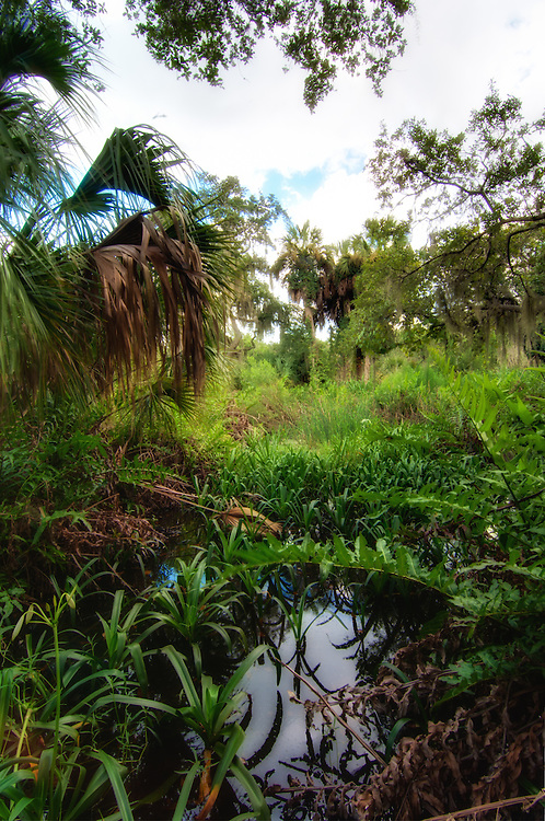 Palms, lilies, ferns, and oaks - all commonly found in Florida wetlands like this one just north of Palmetto, Florida in Manatee County.