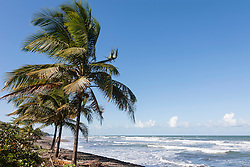 Palm trees on the beach, Samara, Costa Rica