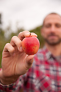 James Kohn with one of the pippin apples from Wandering Aengus Cidery