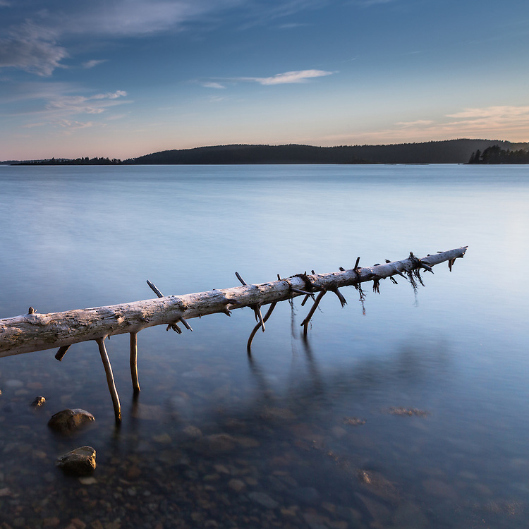 An old spruce tree trunk hangs in the balance over the lake at Pretty Marsh in Acadia, Maine.
