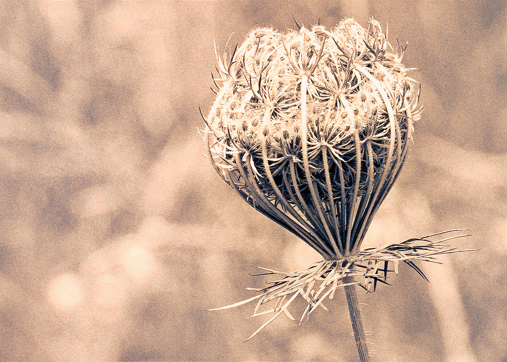 A dry fall day lacking in color and life, nature still stands alone in hopes of surviving until spring