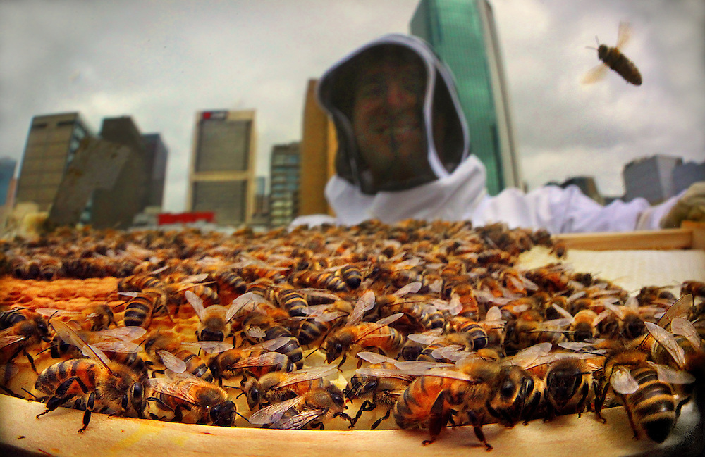 Vanessa Kwiatkowski & Mat Lumalasi have a 'Rooftop Honey' business, 17 hives in the greater CBD!  Pic By Craig Sillitoe 22/02/2011 melbourne photographers, commercial photographers, industrial photographers, corporate photographer, architectural photographers, This photograph can be used for non commercial uses with attribution. Credit: Craig Sillitoe Photography / http://www.csillitoe.com<br /> <br /> It is protected under the Creative Commons Attribution-NonCommercial-ShareAlike 4.0 International License. To view a copy of this license, visit http://creativecommons.org/licenses/by-nc-sa/4.0/.