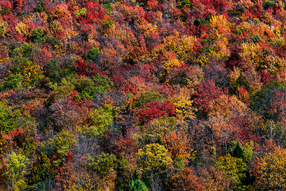 Abstract of colorful autumn trees on a mountainside, Liberty, Pennsylvania, USA