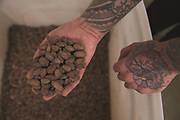 A tattooed hand holds a handful of Cocoa beans at the Mast Brothers kitchen on 12th March 2015 in East London, United Kingdom