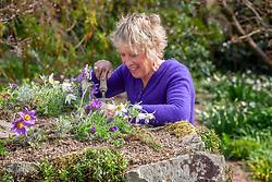 Carol Klein weeding area around pulsatillas before mulching with gravel
