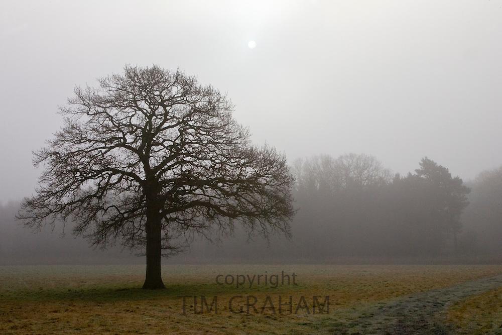 Tree in foggy field, Oxfordshire, United Kingdom