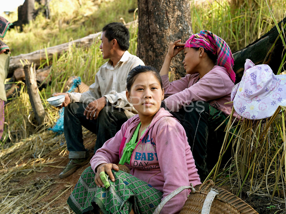 A White Hmong ethnic minority family take a break from collecting the harvested glutinous rice on an upland field, Ban Hauywai, Phongsaly province, Lao PDR.  Compared to more modern sedentary lowland farmers, shifting cultivators generally use much fewer purchased inputs.  The main inputs are family labour, hand tools and seeds. Purchased fertilisers are never used on sloping land.