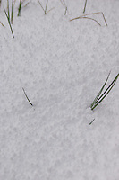 Close up of snow covering grass, Wicklow, Ireland